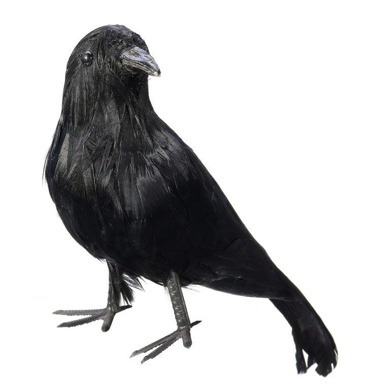 Como Usar A Crow Brawl Stars